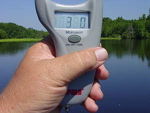 Digital scales showing weight of a 3 lb bream
